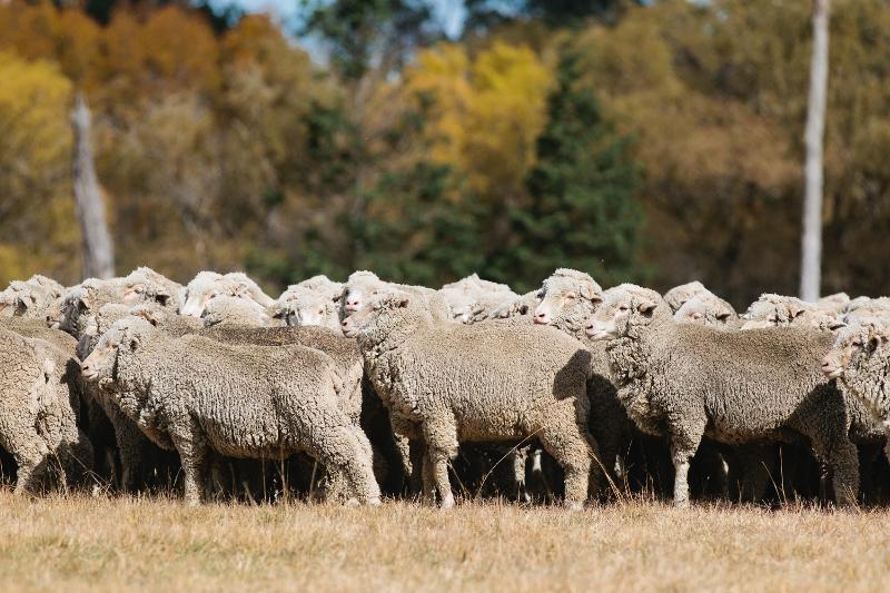 50th Anniversary of the Ermenegildo Zegna Wool Awards - Farm - Sydney / Photographer: Caroline McCredie