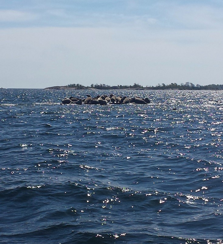 Seals on a little archipelago near Stockholm #outthere #carrerasun