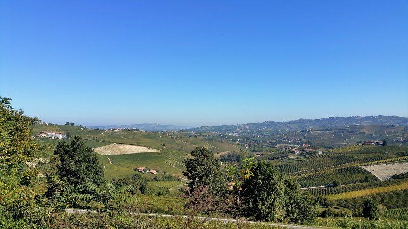 Weingegend bei Barolo im Piemont