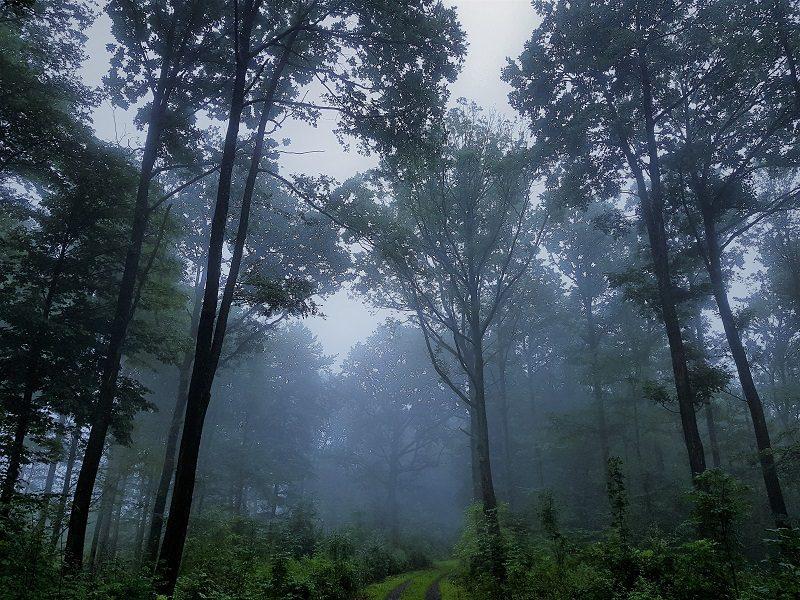 Gorillas im Nebel - Wanderung in Unterfranken