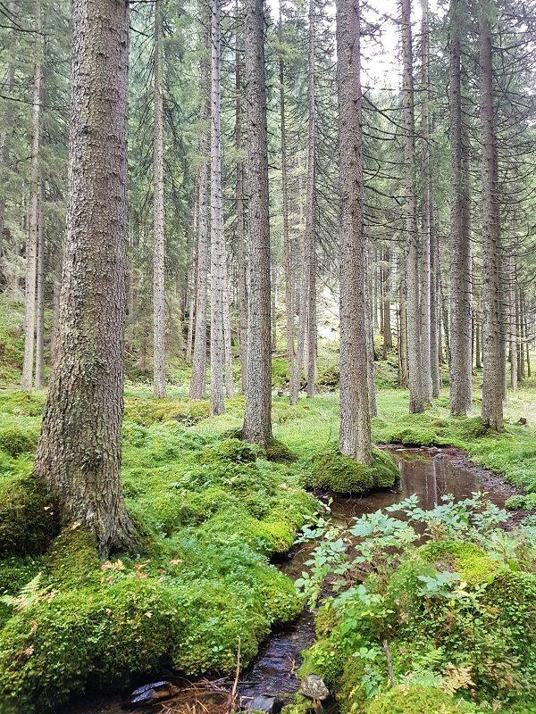 Ökologischer Fußabdruck (olschis-world)