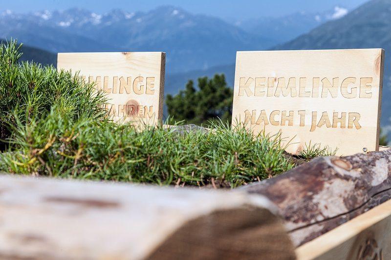Keimlinge c Hochzeiger Bergbahnen Chris Walch