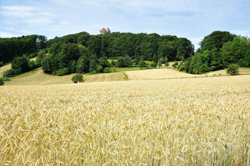 Wanderung im Nürnberger Land - Feld mit Aussicht