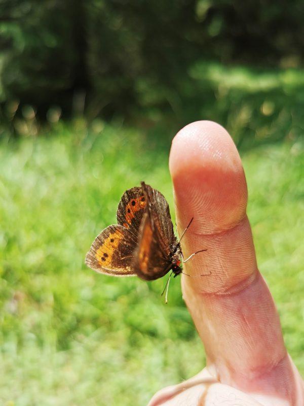 Bärenbadrunde in Hinterhornbach - Schmetterling Grenzgänger