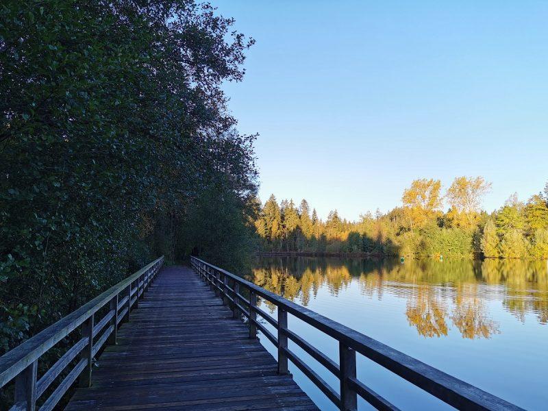 Waldsee in Lindenberg im Allgäu am frühen Morgen im Herbst