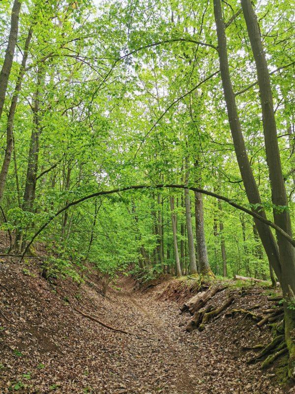 Hohlweg hinauf zum Laubhügel im Landkreis Schweinfurt