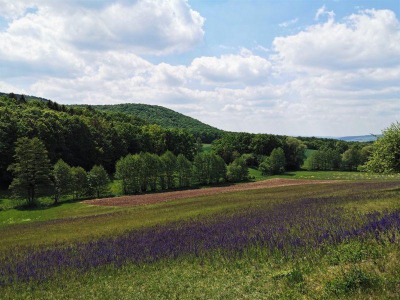 Laubhügel im Landkreis Schweinfurt