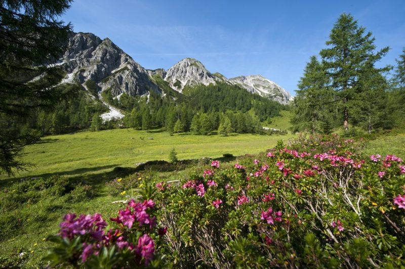 Tauernkarleiten_Blick auf kleiner Bärenstaffel links_ großer Bärenstaffel Mitte -Steinfeldspitze rechts_Altenmark-Zauchensee Tourismus