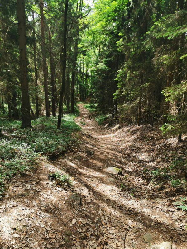Weg zur Ruine Lichtenstein in den Haßbergen