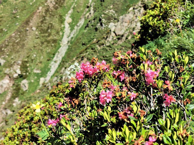 Aufstieg zur Rüsselsheimer Hütte im Pitztal