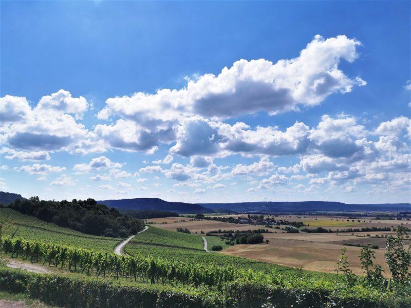 Aussicht mit Blick auf die Weinlage Wiebelsberger Dachs - Wanderung Rund um den Zabelstein