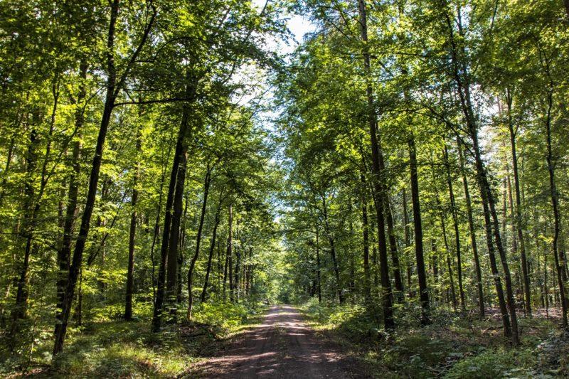 Im Wald - Wanderung Rund um den Zabelstein