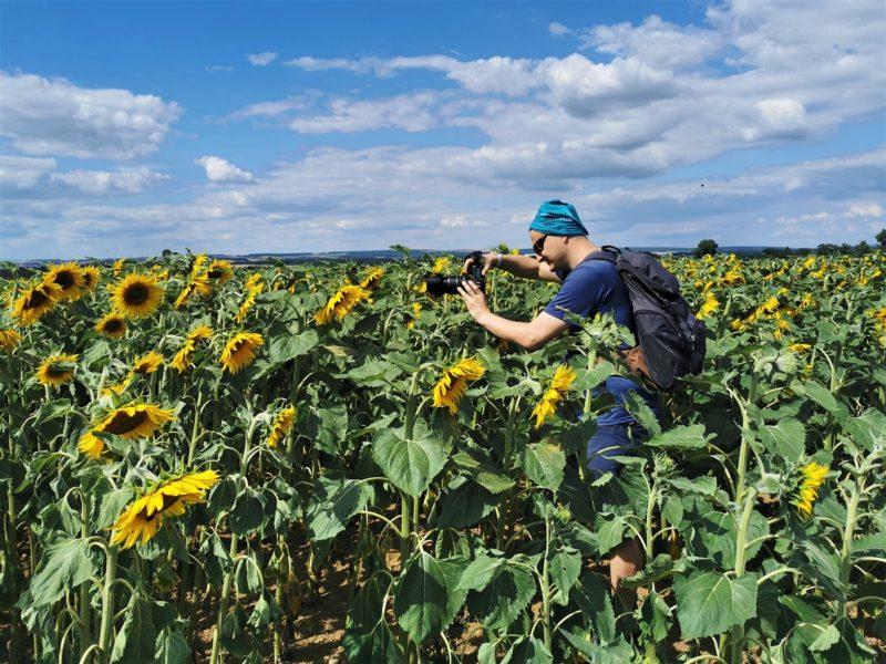 Marco in Sonnenblumen - Wanderung Rund um den Zabelstein