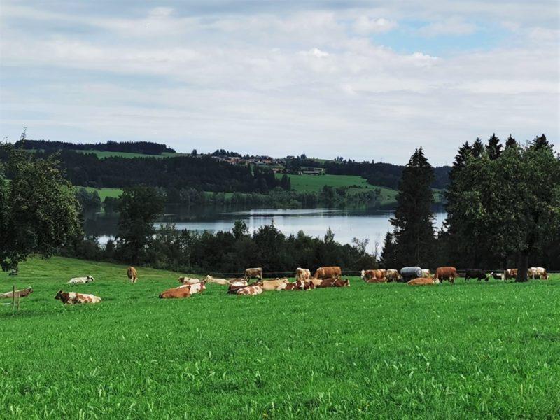 Ausblick auf den Rottachsees im Rahmen der Wandertrilogie Allgäu