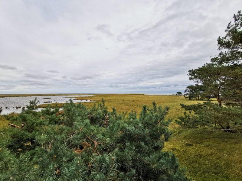 Rundwanderweg durch den Nationalpark Vorpommersche Boddenlandschaft in Mecklenburg-Vorpommern