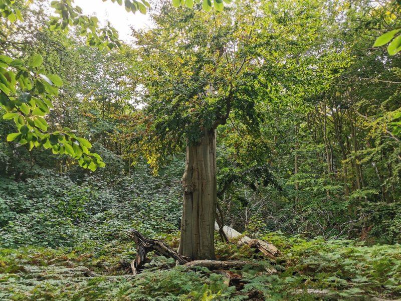 Tour mit einem Rager durch das Naturschutzgebiet Insel Vilm in Mecklenburg-Vorpommern