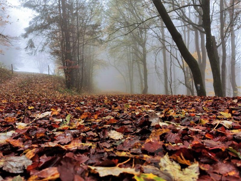 Herbststimmung auf der Extratour Guckaisee in der Rhön
