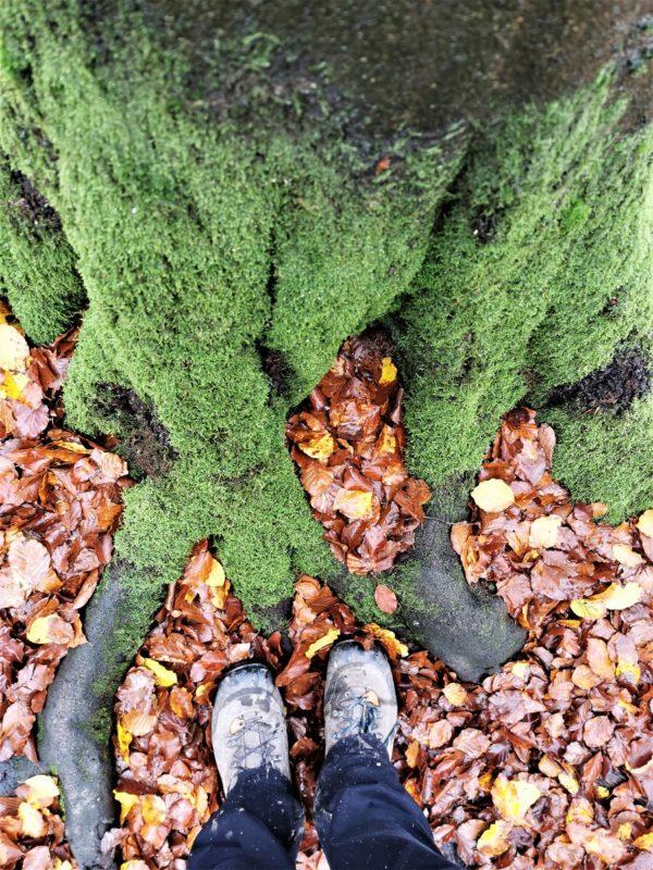 Im Wald auf der Extratour Guckaisee in der Rhön
