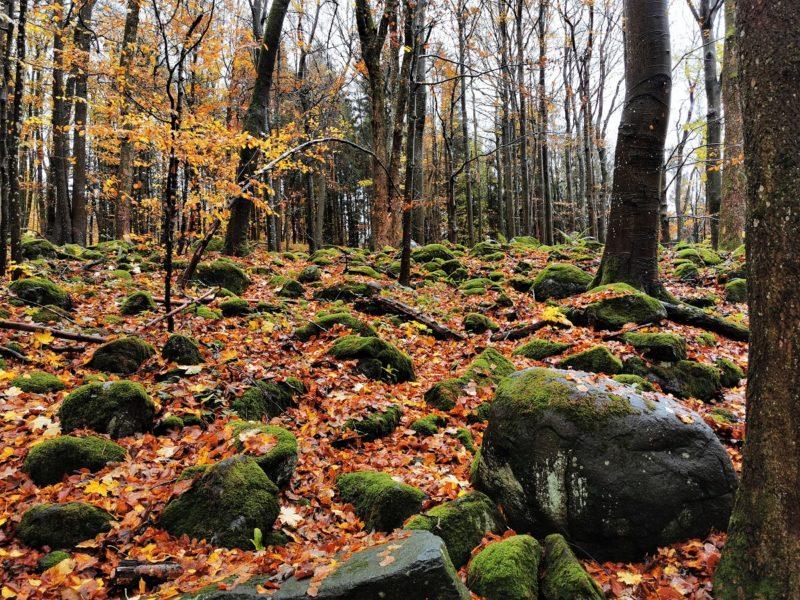 Wald und Steine auf der Extratour Guckaisee in der Rhön