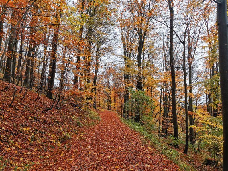 Waldweg im Herbst auf der Extratour Guckaisee in der Rhön