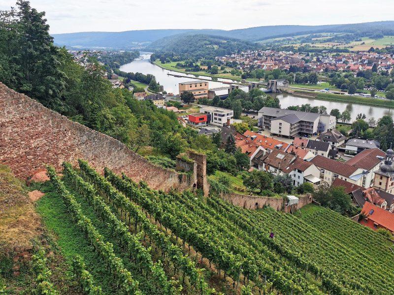 Weinberg unterhalb der Clingenburg in Churfranken